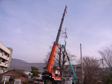 欅の吊り切り